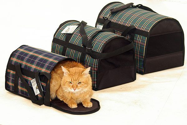 Перенесення і сумки