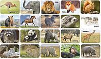 Комплект магнитов с фотографиями животных