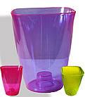 Орхидейниця 17,5см, (фиолетовый) прозрачная, ММ, фото 2