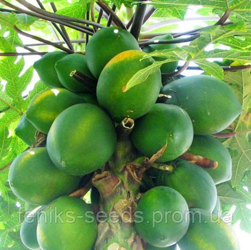 Семена Папайя или Дынное дерево