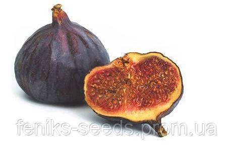 Семена Инжир Черный