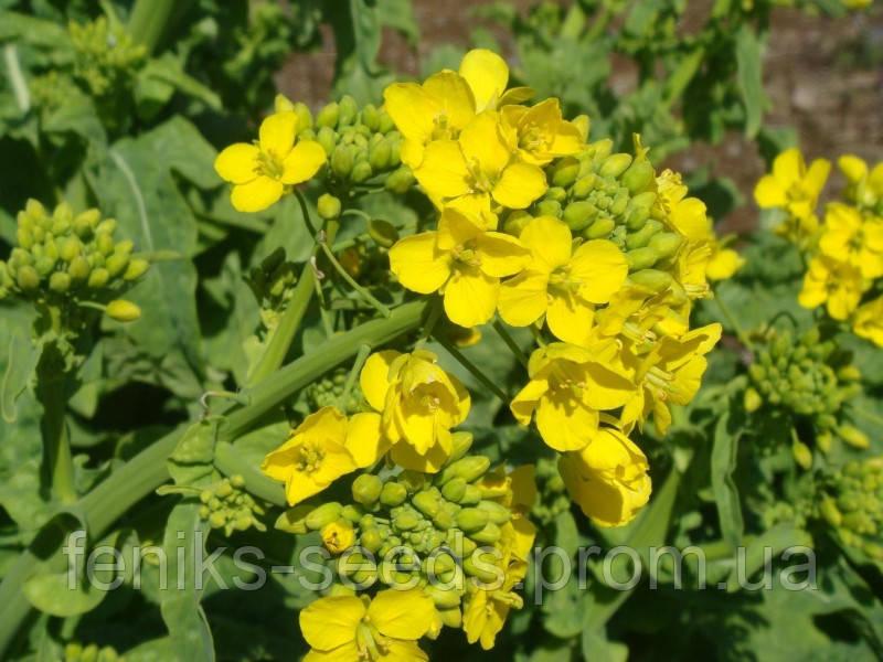 Семена Горчица 0,5кг