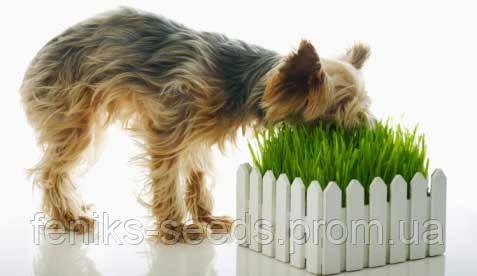 Семена Зелень для Собак