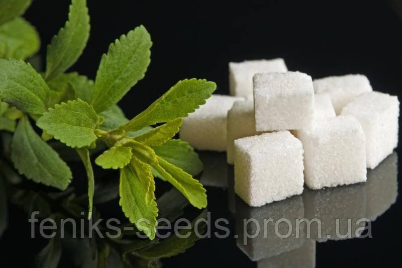 Семена Стевия - в 300 раз слаще сахара