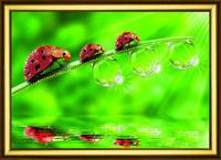 """Красочная и яркая картина """"Прогулка по росе"""" из страз ручная работа"""