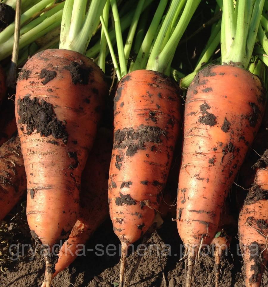 Морковь Йорк F1 фракция 1,8-2,0 Lark Seeds 25000 семян