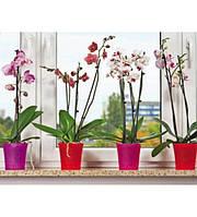 Цветочный горшок Орхидея