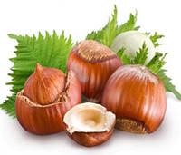 Масло лесного ореха - свойства и применение