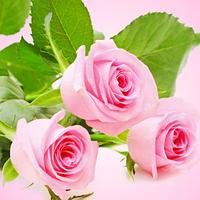 Свежесрезанные розы 5гр (парф. композиция)