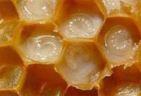 Экстракт пчелиного маточного молочка 30гр