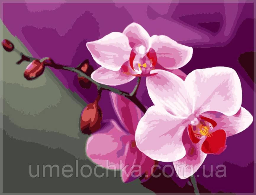 Набор для рисования Идейка Розовые орхидеи KH1081