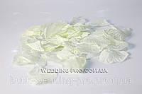Лепестки роз, белые