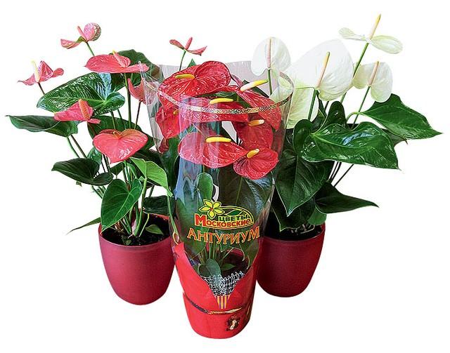 Цветы в дом купить харьков, невесты красноярск