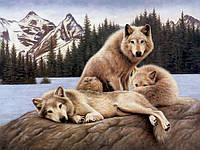 Алмазная вышивка DM-270 Волки на отдыхе 50*38см