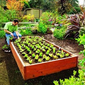 Садовые растения и грунты