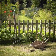 Сад, общее