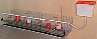 Клетка для содержания бройлеров ЭКО-40, фото 1