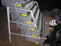 Клетки для перепелов на 636шт. 6этажные., фото 1