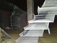 Клетки для перепелов ступенчатые., фото 1