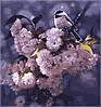 Раскраска по цифрам MENGLEI Птица на ветке