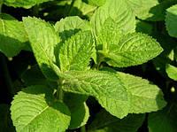 Трава и листья лекарственных растений