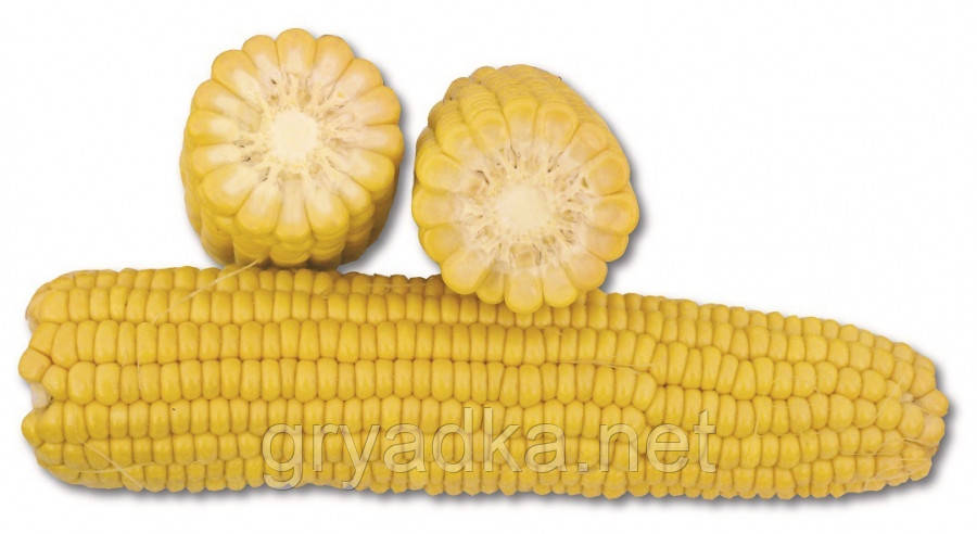 Кукуруза 1708 F1 Lark seeds 2500 семян