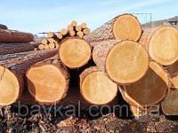 Закупаем кругляк разных пород дерева(для строгания шпона)