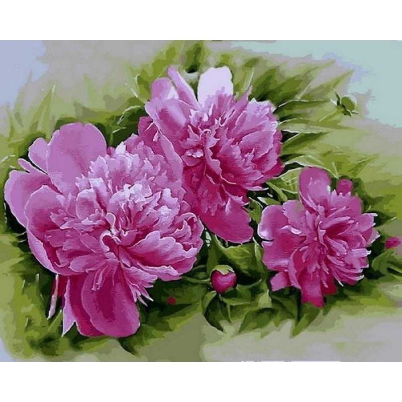 Картина по номерам Пионы Розена Плена, 40x50 см., Mariposa