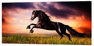 Картина на полотні Декор Карпати Жеребець 50х100 см (z439)