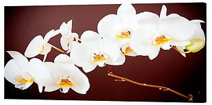 Картина на полотні Декор Карпати Квіти 50х100 см (c438)