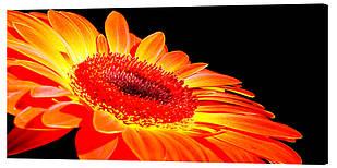 Картина на полотні Декор Карпати Квіти 50х100 см (c39)