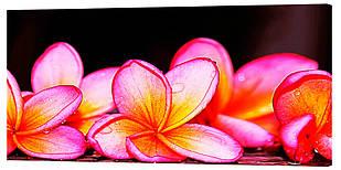 Картина на полотні Декор Карпати Квіти 50х100 см (c167)