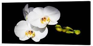 Картина на полотні Декор Карпати Квіти 50х100 см (c378)