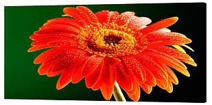 Картина на полотні Декор Карпати Квіти 50х100 см (c37)