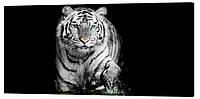 Картина на холсте Декор Карпаты Голубоглазый тигр 50х100 см (z406)