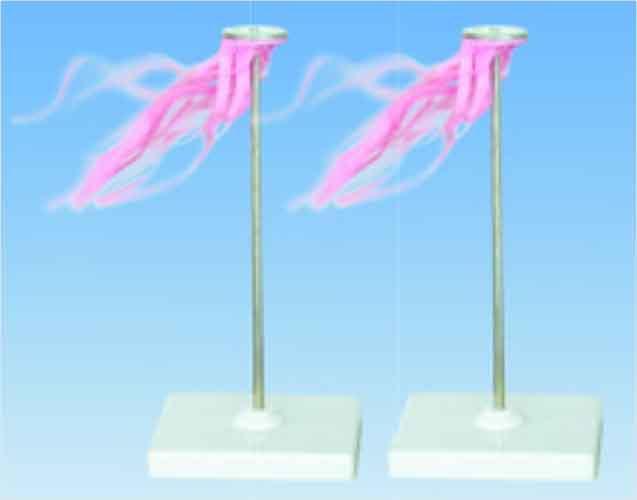 Султани електростатичні (пара)