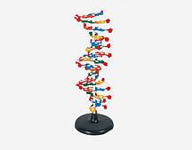 Модель Структура ДНК