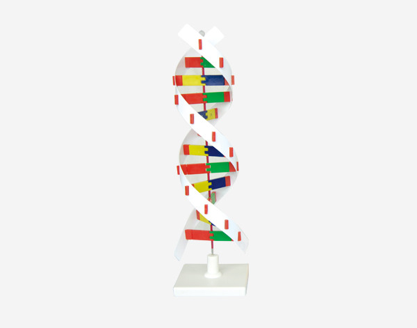 Модель Структура білку