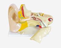 Модель Вухо людини
