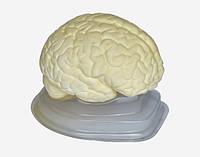 """Модель """" Головний мозок людини """""""