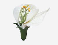 Модель квітки гороха