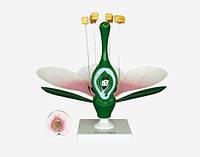 Модель квітки персика