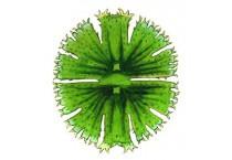 Средства для борьбы с водорослями