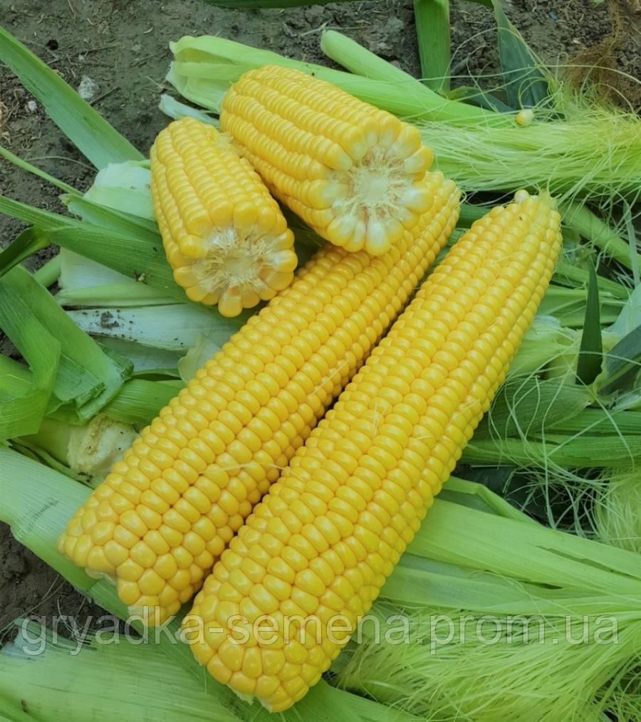 Кукуруза 1860 F1 Lark seeds 25 000 семян