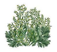 Веган аптека. Альтернативная медицина. Антипаразитарные травы, методы лечения и очистки.
