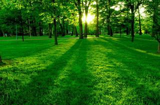 Зеленый цвет полезен для глаз