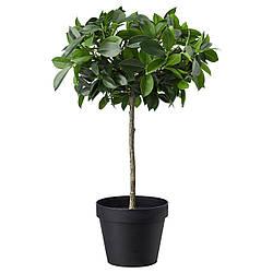 Искусственное растение в горшке IKEA FEJKA 12 см 003.953.08