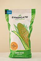 Семена кукурузы Франция ФАО 330 Синдикат