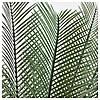 Искусственное растение в горшке IKEA FEJKA 19 см пальма саго 304.103.12, фото 2