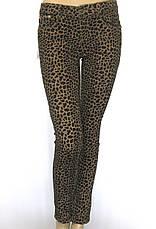 жіночі літні джинси з леопардовим принтом, фото 3